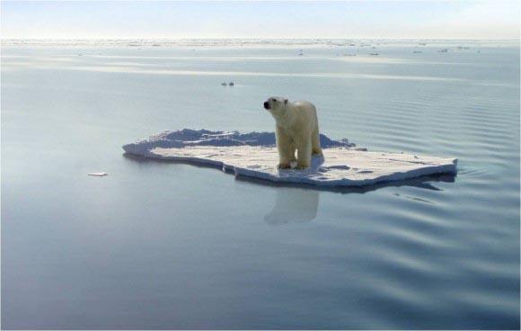 ijsbeer1