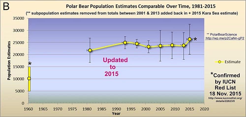 polar-bear-pop1